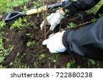hands planting hedge | Shutterstock . vector #722880238