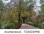 Small photo of Hiking path among rainforest and Thin-bark totara trees on foggy day. Mount Aspiring national park, New Zealand