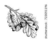 oak branch with acorns... | Shutterstock .eps vector #723051196
