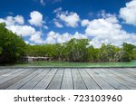 mangrove trees in caribbean sea | Shutterstock . vector #723103960