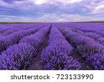 lavender field sunset and lines.... | Shutterstock . vector #723133990