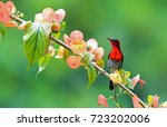 Stock photo the colorful bird and beautiful flower 723202006