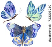exotic butterfly wild insect in ... | Shutterstock . vector #723305260