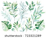 Stock photo watercolor greens collection texture with greens branch leaves tropical leaves foliage perfect for 723321289
