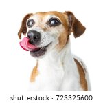 Stock photo dog licked with a cunning snout funny pet face dog diet white background 723325600