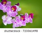 Pink Orchid With Water Drops...