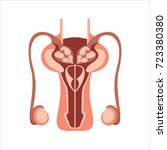 male reproductive system vector ... | Shutterstock .eps vector #723380380