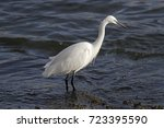 white egret looking for food.... | Shutterstock . vector #723395590