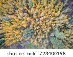 spruce and aspen in fall colors ... | Shutterstock . vector #723400198