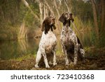 two german shorthaired pointer...   Shutterstock . vector #723410368
