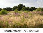 Example Of Breckland Grassland...