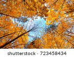 autumn tree tops of forest... | Shutterstock . vector #723458434