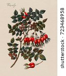 branch of the rosehip with...   Shutterstock . vector #723468958