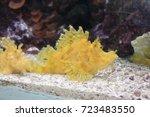 exotic saltwater fish | Shutterstock . vector #723483550