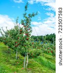 red ripe apples hanging on... | Shutterstock . vector #723507583