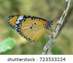 Small photo of A plain tiger butterfly