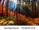 warm autumn scenery in the... | Shutterstock . vector #723631114