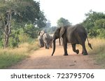 elephant herd crossing the road ... | Shutterstock . vector #723795706