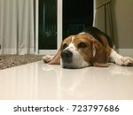 the beagle  | Shutterstock . vector #723797686