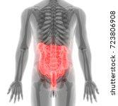 human digestive system anatomy  ... | Shutterstock . vector #723806908