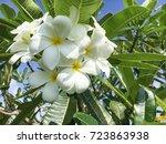 Closeup Yellow White Flower Of...