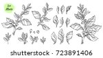 vector collection of hand drawn ... | Shutterstock .eps vector #723891406