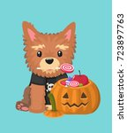 a dog breed yorkshire terrier... | Shutterstock .eps vector #723897763