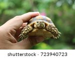 Stock photo tortoise on the hands of man african spurred tortoise cute portrait of baby tortoise geochelone 723940723