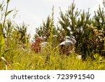 picking berries | Shutterstock . vector #723991540