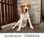 beagle dog sit at door | Shutterstock . vector #724024126
