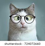 Small photo of cute cat in myopia glasses squinting close up funny meme portrait on blue wall background