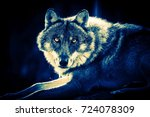 grey wolf  canis lupus  | Shutterstock . vector #724078309