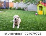 Lovely Dog In The Backyard Nea...