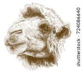 vector antique engraving...   Shutterstock .eps vector #724086640