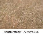Close Up Of High Yellow Grass...