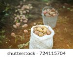 a full sack of potatoes in the... | Shutterstock . vector #724115704