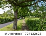 View Of A Leafy Path Alongside...