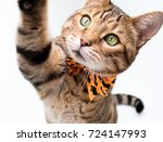 Stock photo halloween cat on white background 724147993