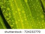 dew on leaf in garden | Shutterstock . vector #724232770