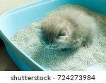 Stock photo natural lighting and shadow of blur newborn persian maine coon kitten is using toilet newborn 724273984