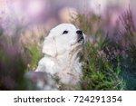 golden retriever puppy portrait ... | Shutterstock . vector #724291354