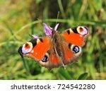 european peacock  aglais io ... | Shutterstock . vector #724542280