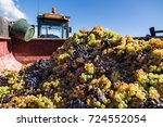 Pile Of Harvested Grapes In A...