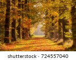forest path covered with fallen ... | Shutterstock . vector #724557040