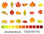 colorful autumn leaves isolated ... | Shutterstock . vector #724570774