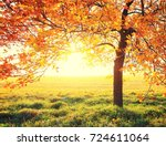 tree with colorful foliage on... | Shutterstock . vector #724611064