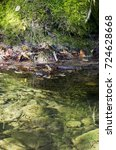 fishes in a transparent river... | Shutterstock . vector #724628668