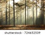 Misty Forest Near Willtown...