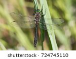 Small photo of American Emerald dragonfly Cordulia shurtleffii at Gravel Lake, near Dawson City, Yukon, Canada