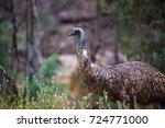 Wild Emu With Blue Neck...